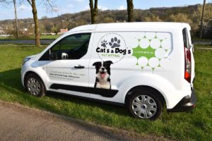 camionnette cat's and dog's